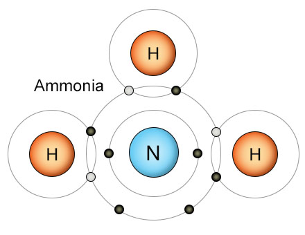 The elements hydrogen also plays an important role in the nitrogen cycle three hydrogen atoms fill the outer shell of a nitrogen atom creating an ammonia nh3 ccuart Image collections